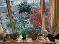 ついに初雪が! - 土筆の庭