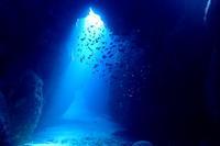 18.11.21陽がサンサンと - 沖縄本島 島んちゅガイドの『ダイビング日誌』