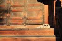護国寺で猫撮影 - 2 - - うろ子とカメラ。