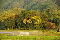 天理市夜都伎神社の森(やつぎじんじゃ・やとぎじんじゃ) - ぶらり記録:2 奈良・大阪・・・