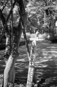 極上の木漏れ日が降り注ぐ電電公社の公園 - Film&Gasoline