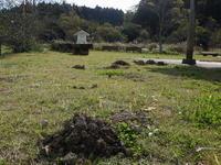 日が射せば、虫たちが元気 - 千葉県いすみ環境と文化のさとセンター