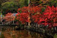 極彩色の龍泉寺(天川村) - 花景色-K.W.C. PhotoBlog