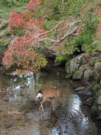 奈良NaraⅧ - 花鳥風猫ワン