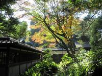 旧前田家本邸和館【駒場公園】 - お散歩アルバム・・静かな睦月