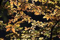 トラツグミとクロコノマチョウ - あだっちゃんの花鳥風月