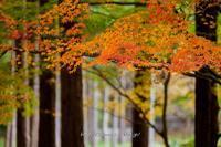 少し渋めに宝福寺紅葉 - 道草Photo Life2