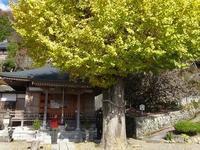 串柿の里のお寺堀越癪観音 - 峰さんの山あるき
