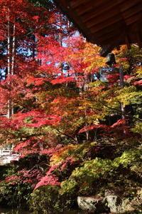 崇禅寺の紅葉 18年 (撮影日:2018/11/20) - toshiさんのお気楽ブログ