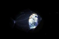 刺激的な水中生物 - 沖縄 ダイビング 水中写真 フォトギャラリー