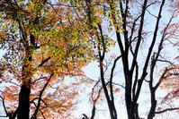 富士五湖巡り#5 - 長い木の橋