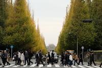 神宮銀杏並木 - 錦眼鏡