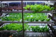 ビジネスホテルに植物工場が - すてきな農業のスタイル
