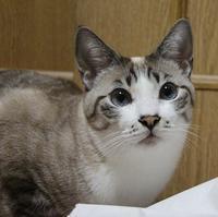 ギンコのお願い - ぎんネコ☆はうす