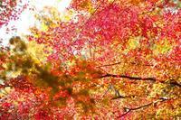 秋を越して冬へ - 無題
