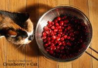 クランベリーを見た猫の反応2018 - Kyoko's Backyard ~アメリカで田舎暮らし~