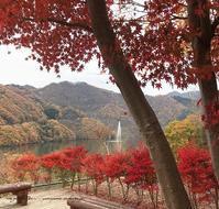 『紅葉狩りと富弘美術館』秋のバス旅行でみつけたお勧め紅葉スポット♪ - neige+ 手作りのある暮らし