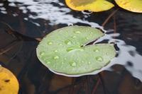 芸術の秋、食欲の秋 - 千葉県いすみ環境と文化のさとセンター