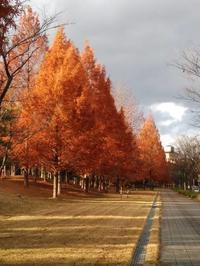 秋の終わりに - シマリスママの布あそび