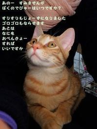 デビュー待ち - 八幡地域猫を考える会