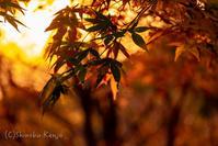 季節の変わり目 - 撃沈風景写真
