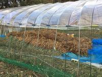 大豆の乾燥 - 自然栽培 果樹カナン