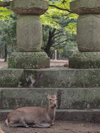 奈良Nara Ⅸ - 花鳥風猫ワン