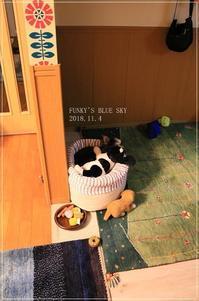 寝顔(み~んな一緒^^) - FUNKY'S BLUE SKY