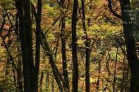 森を流れる川と、新蕎麦まつり♪ - FUNKY'S BLUE SKY