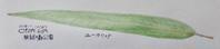 #ネイチャー・ジャーナル #Naturejournal 2018.11.10(土) 曇 気温↑23℃↓15 @林試の森公園 - スケッチ感察ノート (Nature journal)