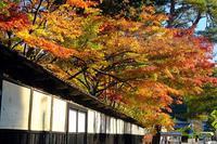 泉恵園(旧中野邸もみじ園) - くろちゃんの写真