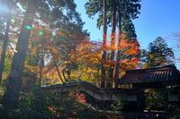 美術館庭(中野邸美術館) - くろちゃんの写真