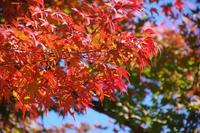 晩秋の紅葉狩り - 季節の風を追いかけて
