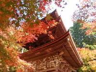 紅葉を求めて①湖東三山~竹生島 - うららフェルトライフ