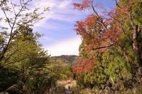 高尾山のオヤマボクチ(良)10月31日撮影 - 野山の花たち