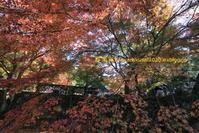 南禅寺に行く-6 - 写楽彩2