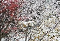 七日原初雪で初積雪 - 標高480mの窓からⅡ
