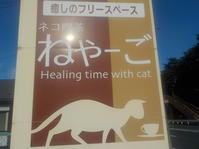 猫カフェ・「ねやーご」で遊ぶ - 日頃の思いと生理学・病理学的考察