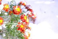 初雪と紅葉の記録 - Pastel color
