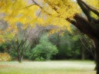昭和記念公園の紅葉いろいろと - 光の音色を聞きながら Ⅳ