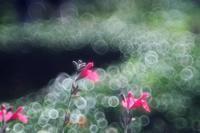 昭和記念公園、花もいろいろ - 光の音色を聞きながら Ⅳ