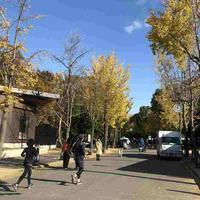 大阪マラソン2日前の大阪城公園でジョギング - ちゃーぼー日記