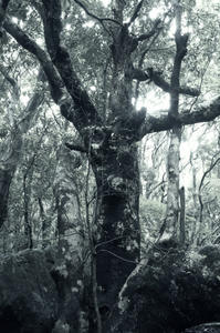 屋久島の照葉樹林 - 写真を想う日日