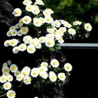 葬式のレール⒁墓守 - 鯵庵の京都事情