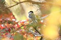 富士山麓の野鳥たち・1♪ - happy-cafe*vol.2