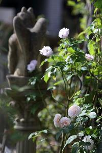 11月の庭 - バラと遊ぶ庭