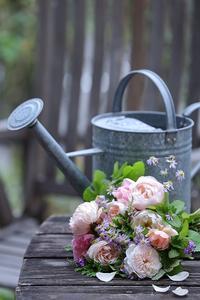 秋バラと遊ぶ - バラと遊ぶ庭