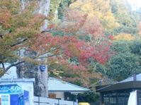 箕面山の紅葉を見に行ってきました。 - 時の流れに身を任せ…