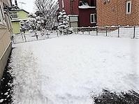 積雪20センチ(約) - わんわん・パラダイス