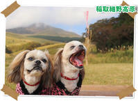 2018年11月10日稲取細野高原/滑沢渓谷@伊豆 - 週末は、愛犬モモと永吉とお出かけ!Kimi's Eye